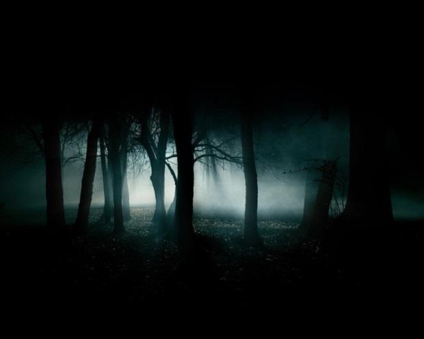 dark-forest-1