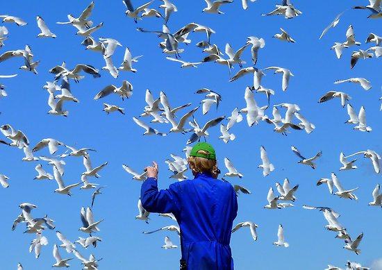 work-6391737-2-flat550x550075f-experience-life-in-3d-seagulls-nz